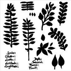 TCW - 6x6 Stencil - Herbarium
